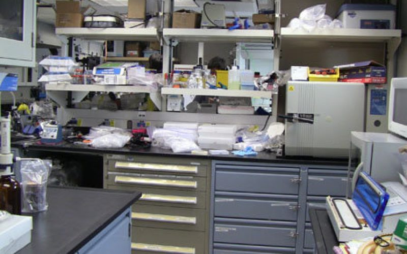 Cleaning the Labs
