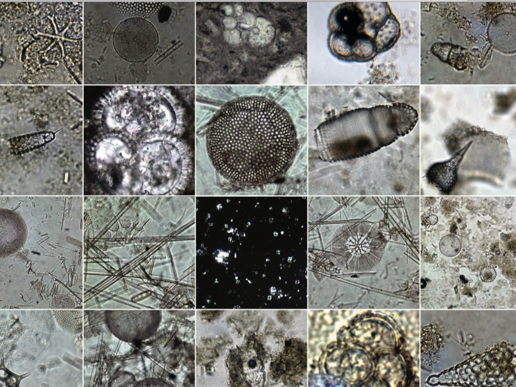 Microfossils poster