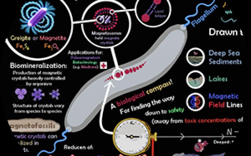 Magneto-Tastic Microbe Poster