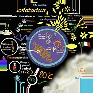 thumbnail image for sulfolobus microbe poster resource