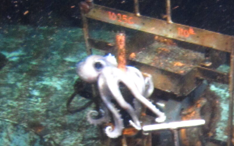 Octopus Hugs Ancient Data Logger from the Deep