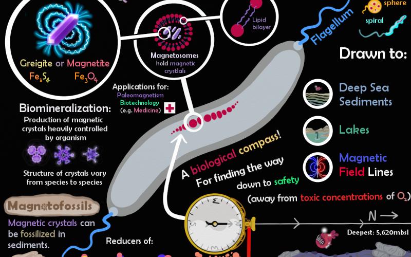 Magneto-tastic Microbe Monday!