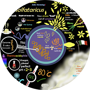 thumbnail image for sulfolobus microbe poster resource