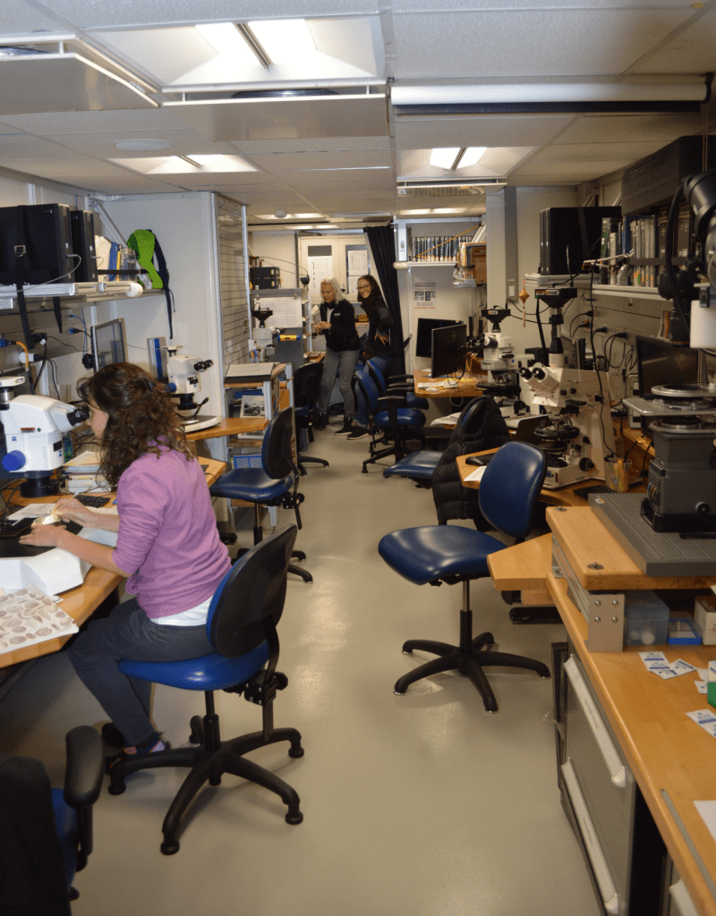 A corridor in a lab. There are lab benches lining the walls, and each station has a microscope and a swiveling chair. There are two scientists in the back of the room - one is smiling at the camera and one is looking down. There is another scientist in the foreground looking into a microscope.