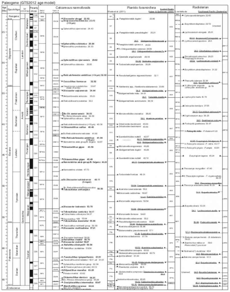 A large chart listing the time divisions of the Paleocene, with many scientific taxa listed for each one. Next to each scientific name, there is an up or down arrow.