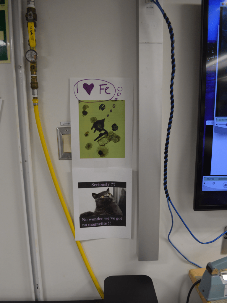 "Two pictures printed out and taped to a wall. The top one is a microscope image of a radiolarian coated in iron pyrite, which appears black on the microscope. A thought bubble has been drawn over the radiolarian that says ""I [heart] Iron"". The second image is a grey cat with a wide-eyed, surprised looking expression. The caption on the picture says ""Seriously?? No wonder we've got no magnetite."""